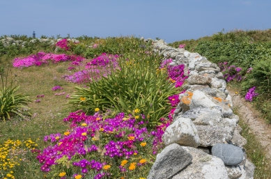 #jardin #iledeSein #muret