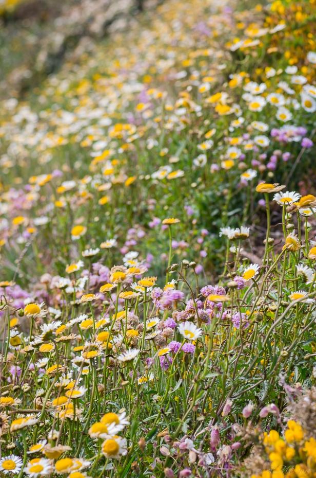 #flore #macro #printemps #lande