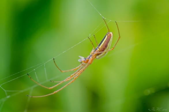 #araignée #arachnide #macro