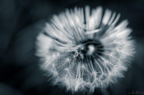 #macro #flore #nb