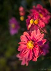 #macro #flore #automne