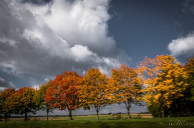 #surlaroute #arbres #automne #contrastes