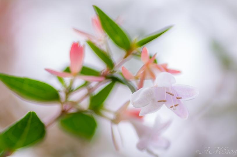 #macro #flore #highlights #pureté