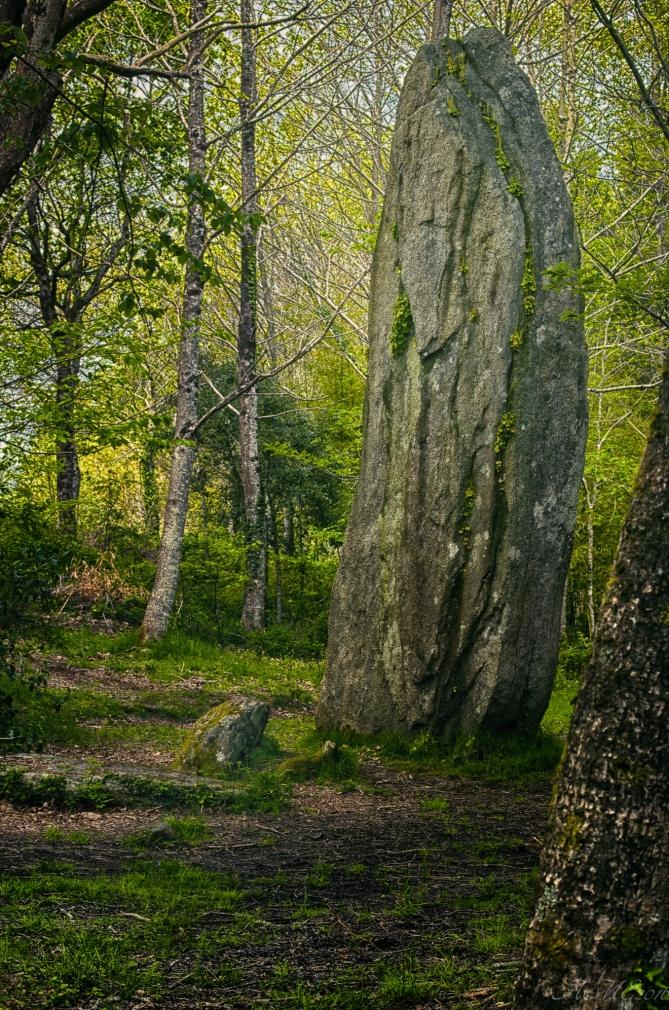 Le Vieux Sage ©AMErdogan2016 - Tous droits réservés
